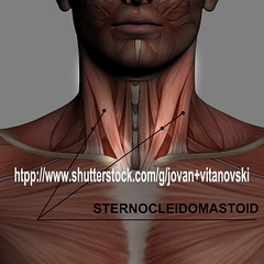 sternocleidomastoid (www.pond5.com/artist/vitanovski) Tags: people male men standing fulllength medical anatomy rearview biology frontview anatomically anatomic illustrationandpainting thehumanbody healthcareandmedicine medicaleducation muscularbuild humanmuscle medicineandscience