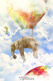La migración de los elefantes