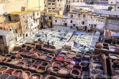 Morocco-20131127-00452(Canon EOS 500D) (ShaneAndRobbie) Tags: africa travel leather morocco medina fes tannery feselbali