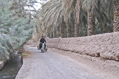 علف چینی در باغات (Daily Frames by Fera-) Tags: bam مسجد بم ارگ شهر حنا bamcitadel خشت