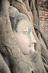 Wat Mahathat Buddha Head Entwined in Roots, Ayutthaya (Oliver J Davis Photography (ollygringo)) Tags: world old travel heritage history abandoned archaeology monument stone architecture buildings thailand temple construction ancienthistory ancient nikon ruins southeastasia head spires buddha stupa towers roots unescoworldheritagesite growth civilization wat ancientcivilization siam archeology civilisation entwined worldheritage ayutthaya chedi entangled prang d90 watmahathat 2013 ancientcivilisation phranakhonsiayutthaya ayutthayahistoricalpark