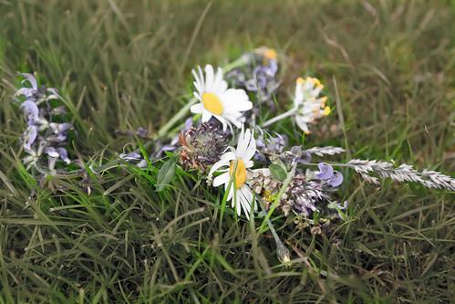 Auch schöne Blumen können welken...