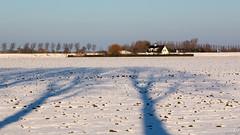 Shadows on the snow (BraCom (Bram)) Tags: trees winter snow holland netherlands canon landscape bomen shadows farm widescreen sneeuw nederland polder 169 boerderij zuidholland oudetonge goereeoverflakkee schaduwen southholland canonef24105mm bracom canoneos5dmkiii