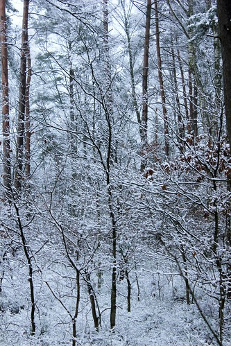 "Im Winterwald (mit Schnee) 2015 • <a style=""font-size:0.8em;"" href=""http://www.flickr.com/photos/69570948@N04/15784042323/"" target=""_blank"">View on Flickr</a>"