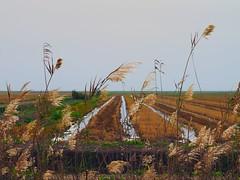 Donana 97 (xotico) Tags: naturaleza caballos andaluca huelva aves sur senderismo doana lince carril marismas ornitologa islamnima
