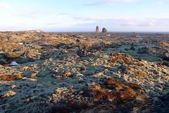 iceland - snaefellsnes (valeriadalua) Tags: sea plants snow nature field rock landscape island lava coast iceland moss lichen geology formations peninsular snaefellsnes flowersthriveinshelterednooksandcrannies