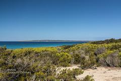 Littoral dunes in Migjorn (Oddiseis) Tags: beach spain mediterranean dune formentera balearicislands migjorn