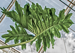 leaf (ginger_scallywag) Tags: uk flowers cactus england sculpture orchid fern tree water gardens blue
