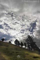 paesaggio, landscape (paolo.gislimberti) Tags: trees italy alberi italia piemonte piedmont conifers cloudysky mountainlandscape conifere cielonuvoloso susavalley vallesusa paesaggiodimontagna alpinegrassland prateriaalpina