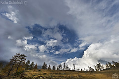 paesaggio, landscape (paolo.gislimberti) Tags: trees alberi piemonte piedmont conifers cloudysky mountainlandscape conifere cielonuvoloso paesaggiodimontagna alpinegrassland prateriaalpina