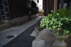 20160517_2274 (Gansan00) Tags: japan sony 日本 kurashiki 倉敷 美観地区 5月 ブラリ旅 ilce7rm2