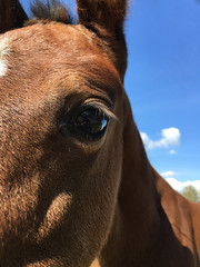 Soul Searching (Mariska Boekema) Tags: horse cute eye oog paard paarden foal schattig veulen
