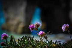 DSC_0150 (FlipperOo) Tags: voyage sea mer france color st rock port de nikon pierre vagues plage morbihan blanc roche arche quiberon instagramapp