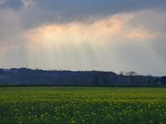 Skylight (Lexie's Mum) Tags: light sky cloud sunlight evening rape rays tees rapeseed