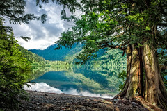 Cameron Lake (Repp1) Tags: canada reflection tree beach clouds forest bc vancouverisland stillwater nuages arbre plage forêt réflexion cameronlake eaucalme greenbeautyforlife