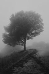 Soledad entre nieblas (miguepram) Tags: blackandwhite bw españa tree blancoynegro beautiful beauty rain fog de sadness tristeza monocromo lluvia spain nikon loneliness sad foggy monochromatic bn rainy campo soledad malaga niebla montes nikonistas nikonista d7200