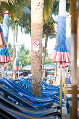 VerticalSquirrel (KumaYami) Tags: tree beach vertical umbrella thailand chair squirrel coconut palm thai bang suk chonburi bangsaen saen         saensuk
