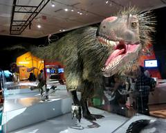 Yutyrannus (edenpictures) Tags: mouth teeth exhibit jaws amnh americanmuseumofnaturalhistory tyrannosaur feathereddinosaurs dinosaursamongus
