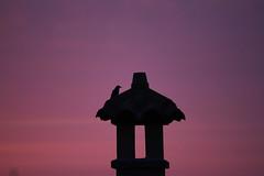 Ogni alba ha i suoi dubbi. (Alda Merini). (Margcoss) Tags: sky clouds sunrise nuvole alba cielo volatile