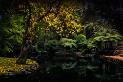 A Lake in a Garden. (Leanne Cole) Tags: autumn trees lake water gardens reflections landscape photographer photos australia images victoria sherbrooke environment fineartphotography dandenongs environmentalphotography fineartphotographer alfrednicholasmemorialgardens nikond800 alfrednicholas environmentalphotographer leannecole leannecolephotography