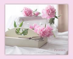 I love Peonies! (bonnie5378) Tags: pink flowers stilllife box peony scissors coth magicunicornverybest june2016