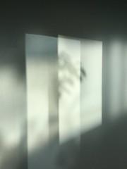 (regard graphiste) Tags: lumire ombre arbre fentre diffraction