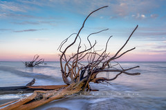 Ebb Tide (betty wiley) Tags: ocean sunset sea tree beach dead coast branch tide southcarolina wave charleston southern snag bettywileyphotography