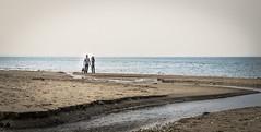Passeggiata in riva al mare (SDB79) Tags: cane mare riva dune acqua spiaggia molise passeggiata camminare petacciato