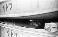 STOWED (Dinasty_Oomae) Tags: blackandwhite bw monochrome cat blackwhite kodak outdoor chiba  retinette ichikawa
