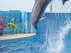 Surprise ! (EmilyOrca) Tags: show water pool mammal aquarium jump marine body dolphin stage splash cetacean