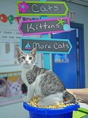 Kitten in Bucket_02 (AbbyB.) Tags: pet animal cat newjersey kitten feline kitty shelter shelterpet petphotography easthanovernj mtpleasantanimalshelter