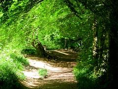 Hermitage, Dunkeld (Traigh Mhor) Tags: scotland glasgow perthshire may hermitage dunkeld 2016