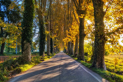 The Road to Eden (Riccardo Malorni - The Light Hunter) Tags: road street autumn trees sunset wild summer italy panorama fall nature beautiful leaves yellow forest landscape spring amazing ancient boulevard shadows magic symmetry driveway sycamore symmetric straight asphalt hdr infinite platain caserta venafro