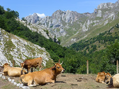 Lazy life (rimerbl) Tags: leica espaa mountains landscape spain asturias mountainside picosdeeuropa leicadlux6 dlux6