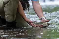 Catch and Release (Scott Michaels) Tags: nikon pennsylvania flyfishing d600 catchandrelease rollingrockclub nikon70200mmvrii