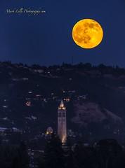 Strawberry Moonrise over UC Berkeley Sather Tower... (markarlilly) Tags: california oakland berkeley fullmoon campanile cal moonrise bayarea berkeleyhills ucberkeley summersolstice sathertower strawberrymoon oaklandhills verticalpano nikon800mm