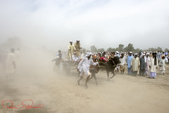 Bull Cart Race , Pakistan (TARIQ HAMEED SULEMANI) Tags: travel summer tourism colors clouds trekking culture sensational tariq cholistan supershot the4elements colorphotoaward theunforgettablepictures concordians sulemani theperfectphotographer tariqhameedsulemani concoedians