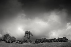 Stormy Days (hezitate) Tags: storm cloud rain precipitation dipton england uk countryside trees tree field farm grass outdoor moody mood outside canon 30d