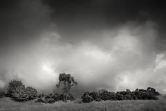 Stormy Days (hezitate) Tags: storm cloud rain precipitation dipton england uk countryside trees tree field farm grass outdoor moody mood outside canon 30d