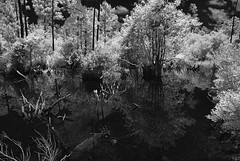 Reflections Gulf State Park (Howell Weathers) Tags: trees blackandwhite reflection nature water monochrome clouds ir outdoor alabama infrared marsh gulfstatepark