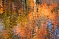 Water Reflection (chantsign) Tags: autumn orange fall water waterreflection nomaheganpark