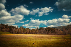 a duck tale (Chrisnaton) Tags: nature field animal clouds landscape la duck outdoor bluesky forestedge