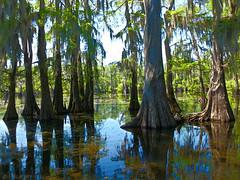 My World Today--HPIM0010 (RLMSR) Tags: lake nature louisiana swamp cypress rlmsr