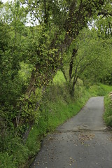 (heidiglass) Tags: trees green nature countryside spring countryroad
