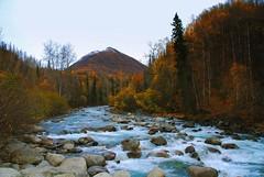 Little Susitna River Alaska (MarculescuEugenIancuD5200Alaska) Tags: alaska littlesusitnariver fleursetpaysages
