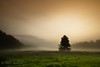 before sunset Explored!!!:-)) (D.Reichardt) Tags: morning trees sunset tree nature fog fairytale germany landscape early europe meadow before stubben notherngermany beverstedt brunshausen wideangle´