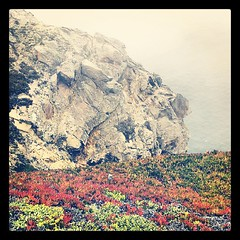 Succulents (donovanbeeson) Tags: sea rock fog foggy pacificocean lichen pointreyes succulents inverness