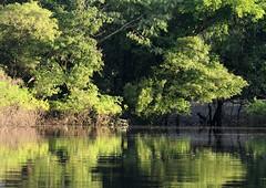 Exploring the Tahuayo River, Loreto District, Peru (Wayne W G) Tags: reflection peru southamerica water reflections river amazon rainforest jungle rivers waters loreto amazona amazonia rainforests jungles tahuayo