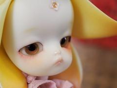 Fa (buchi0122) Tags: bjd fa dollzone