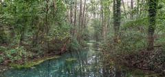 Petite Camarque (stega60) Tags: trees panorama forest arbol wasser basel bach alsace bume arbre hdr bame petitecamarque stega60